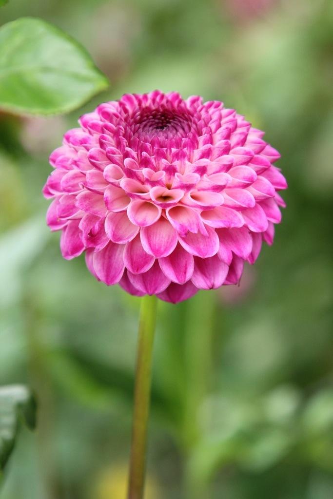 2bd2f8a10896 Gratis Blomst » Blog Archive » Der er efterhånden rigtig mange i blomst🌼