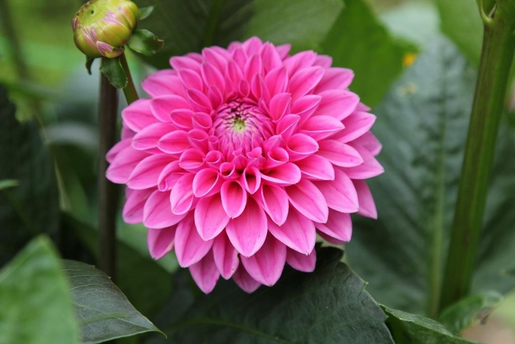 8caf4ed14a12 Gratis Blomst » Blog Archive » Der er efterhånden rigtig mange i ...